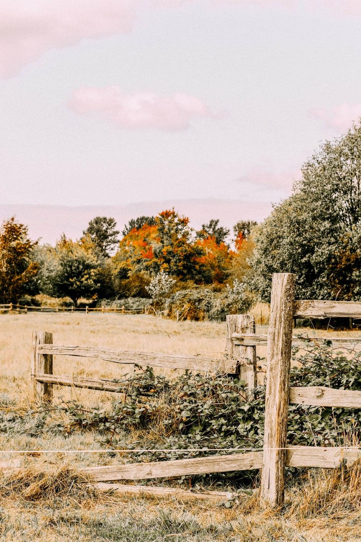 FARMBLOG (47)