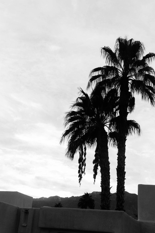palmspringsblog (67)