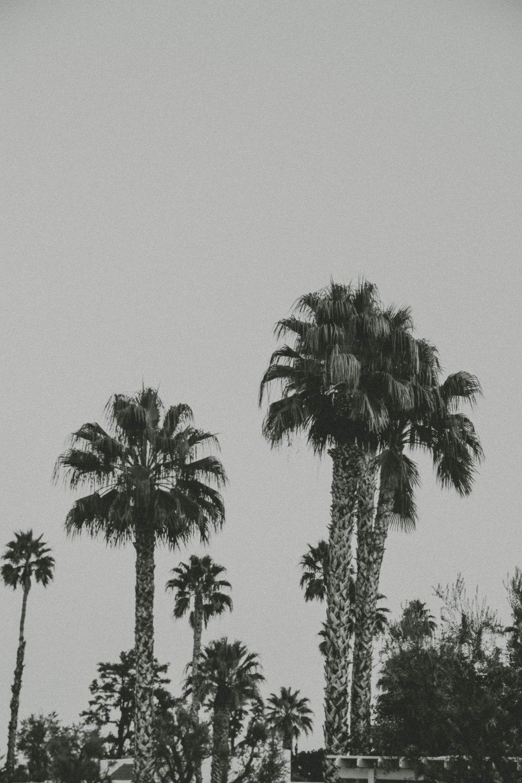 palmspringsblog (80)