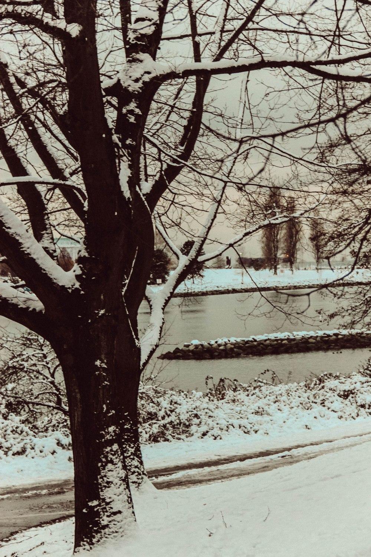 snowblog (17)