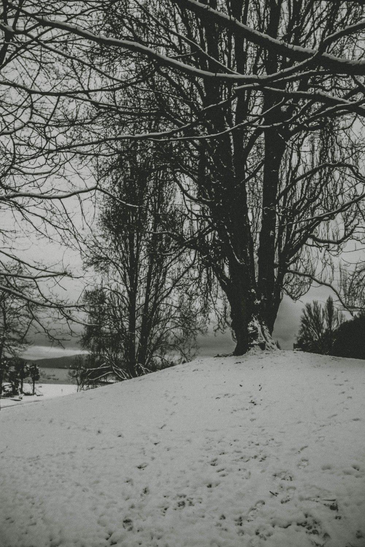 snowblog (18)